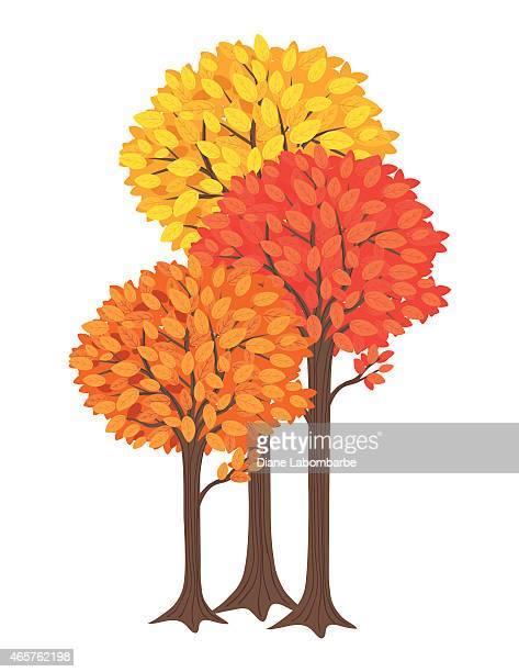 three fall trees. yellow, orange and red - slim stock illustrations