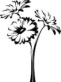 Three gerbera flowers. Vector black and white illustration.