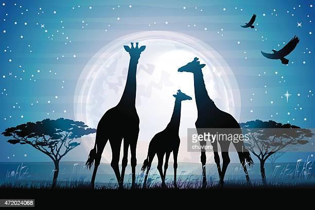 Three Giraffes silhouettes safari in savanna against blue moon