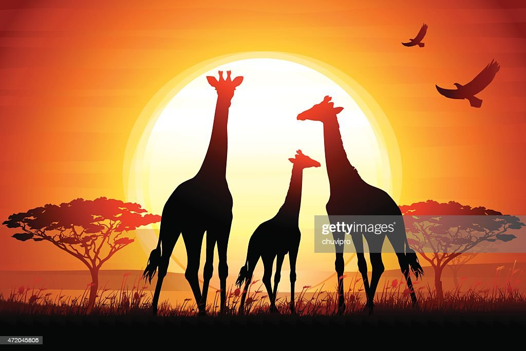 Three Giraffes silhouettes safari in savanna against hot sun : stock illustration
