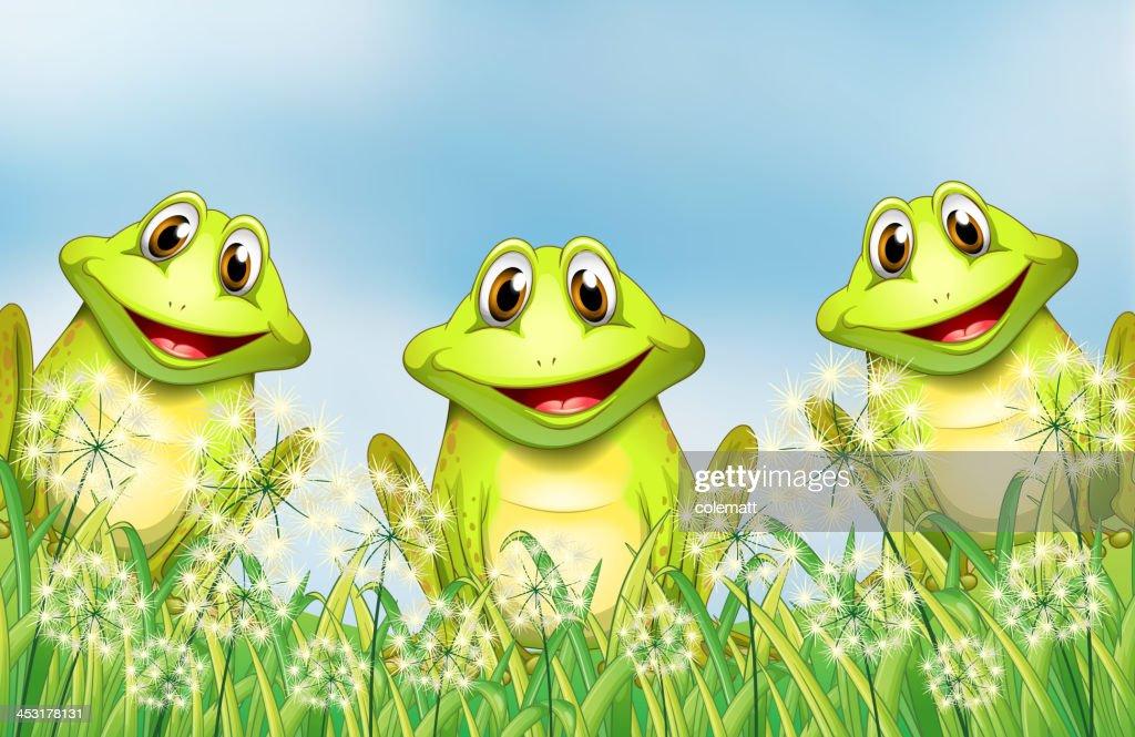 Three happy frogs in the garden