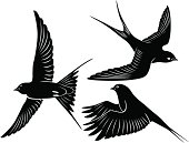 Three illustrations of black swallows
