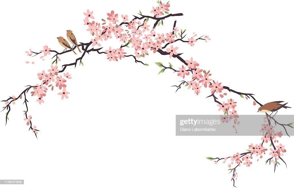 Three Little aves posición elevada y cerezos en flor ramas : Ilustración de stock