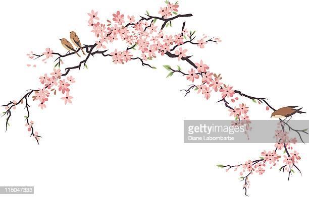 stockillustraties, clipart, cartoons en iconen met three little birds perching and cherry blossoms branches - tak plantdeel