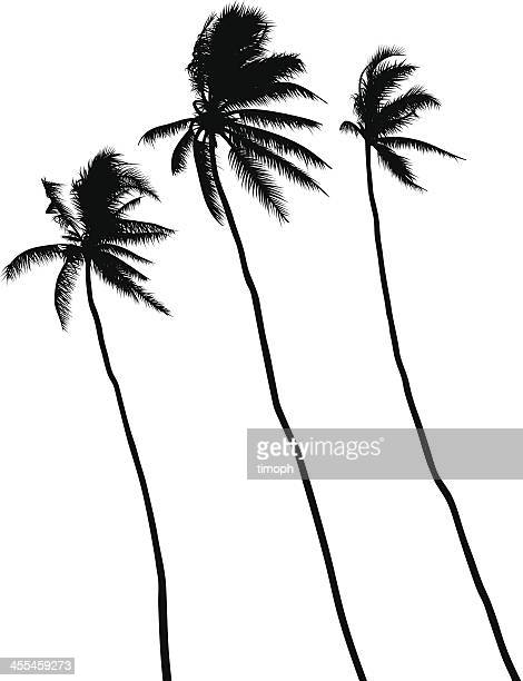 60 Top Tree Top View Stock Vector Art and Graphics - Getty