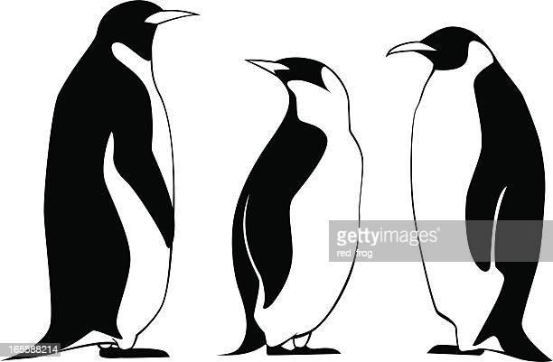 three penguins - antarctica stock illustrations, clip art, cartoons, & icons