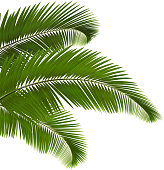 Three pieces of palm leaves in white background