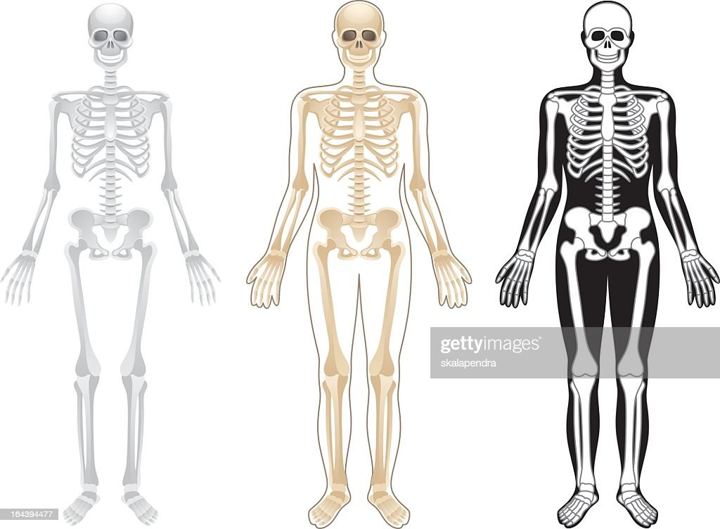 Three skeleton illustrations in different colors on white