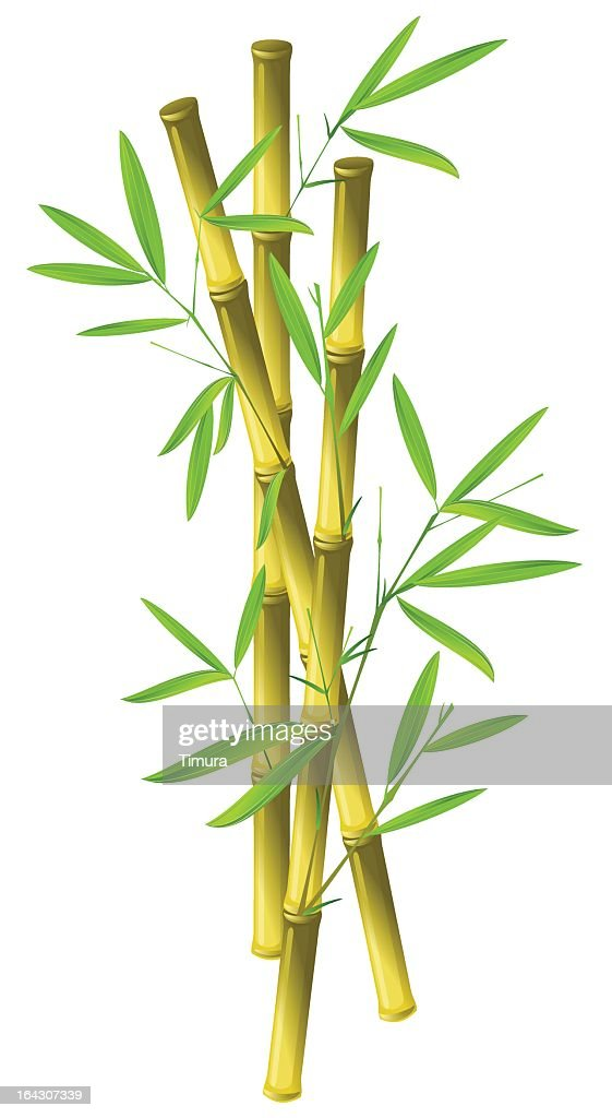 Three sticks of bamboo isolated on a white background