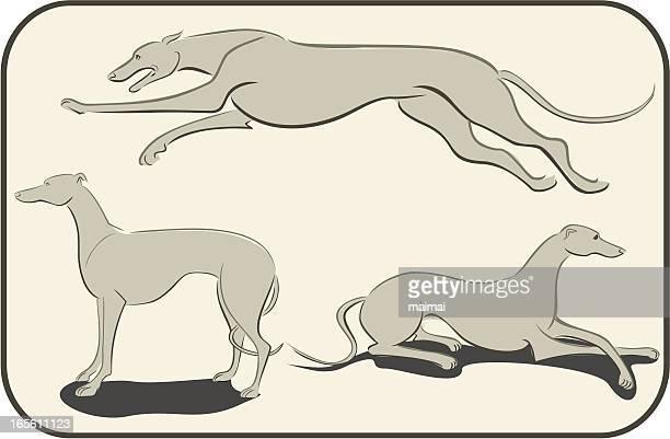 ilustraciones, imágenes clip art, dibujos animados e iconos de stock de tres estudios de greyhound - galgo