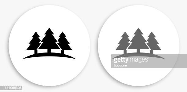 three trees black and white round icon - evergreen stock illustrations