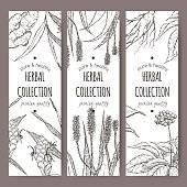 Three vector herbal tea labels with ginger, aloe and ginseng