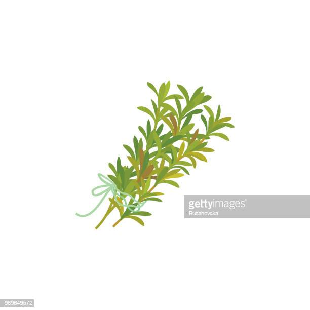 241 Thym Illustrations Getty Images