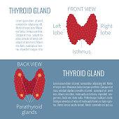 Thyroid gland diagram view