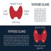 Thyroid gland scheme