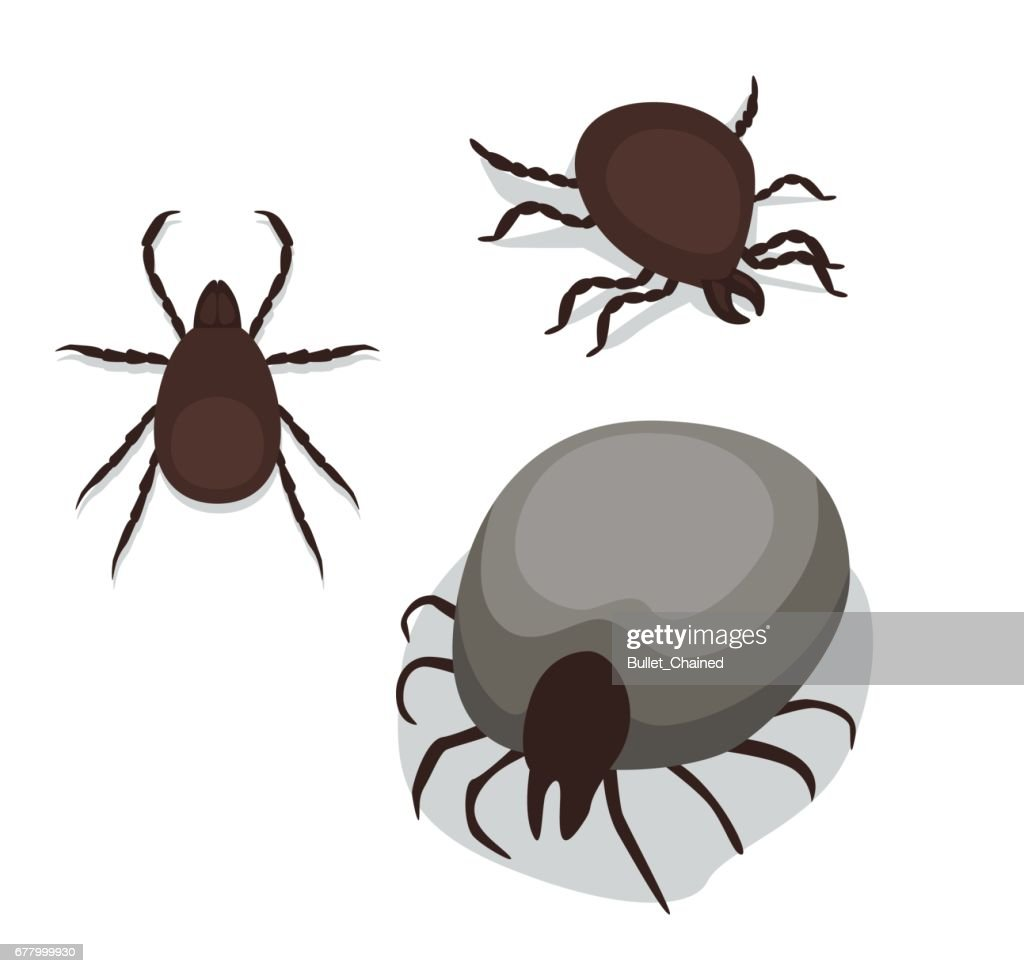 Tick Poses Cartoon Vector Illustration