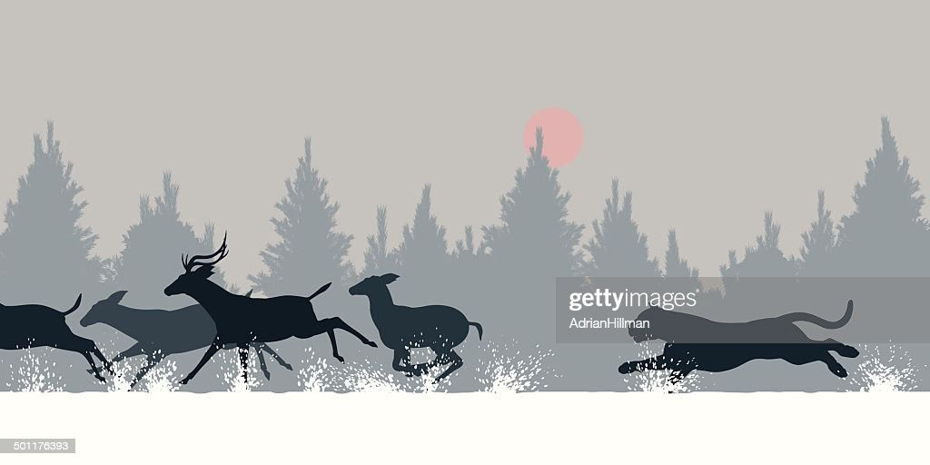 Tiger chasing deer