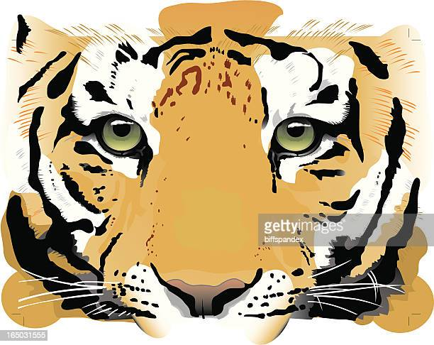 Tiger Eyes - Vector