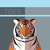 Tiger flat postcard