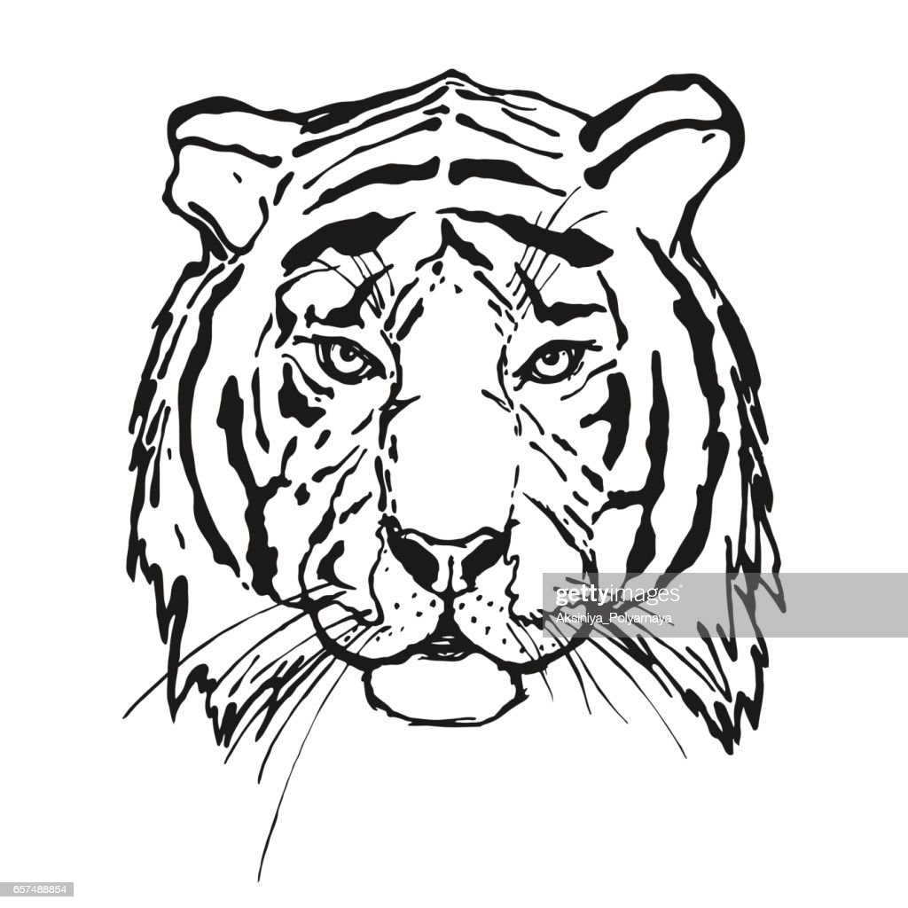 Tiger. Head. Wild animal.