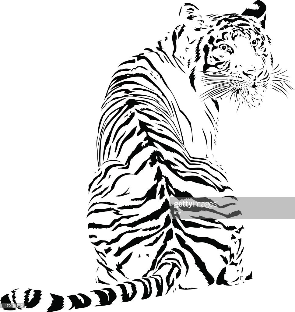 Tiger illustration in black lines : stock illustration