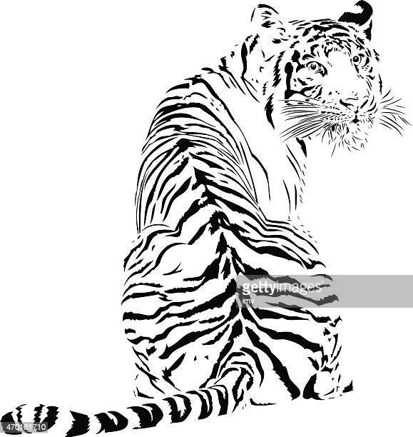 ilustraciones, imágenes clip art, dibujos animados e iconos de stock de tiger ilustración de líneas negras - tigre