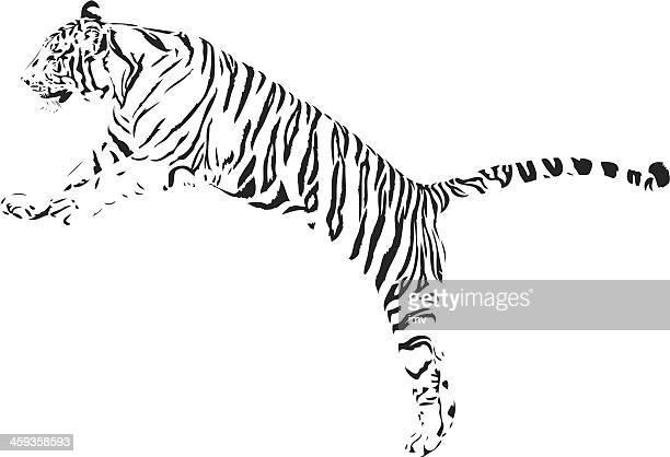 ilustraciones, imágenes clip art, dibujos animados e iconos de stock de salto del tigre b & w - tigre