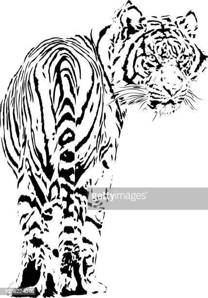 Tiger im Rückblick