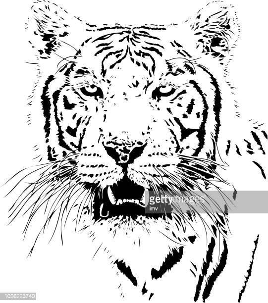 Tiger-Porträt in schwarzen Linien