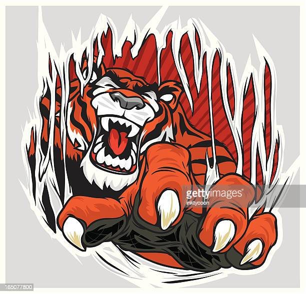 tiger ripping through shirt - claw stock illustrations, clip art, cartoons, & icons