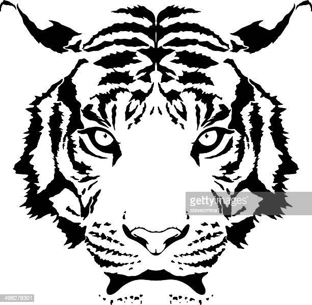 389 Tigre Blanc Illustrations Getty Images