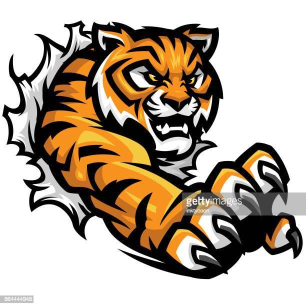 ilustrações, clipart, desenhos animados e ícones de kit de esporte de lágrima de tigre - fighting stance