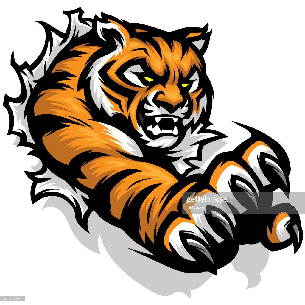 Tiger Tearing