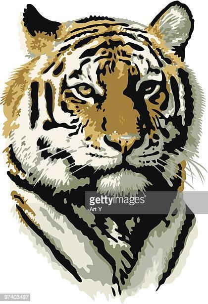 illustrations, cliparts, dessins animés et icônes de tigre - un seul animal