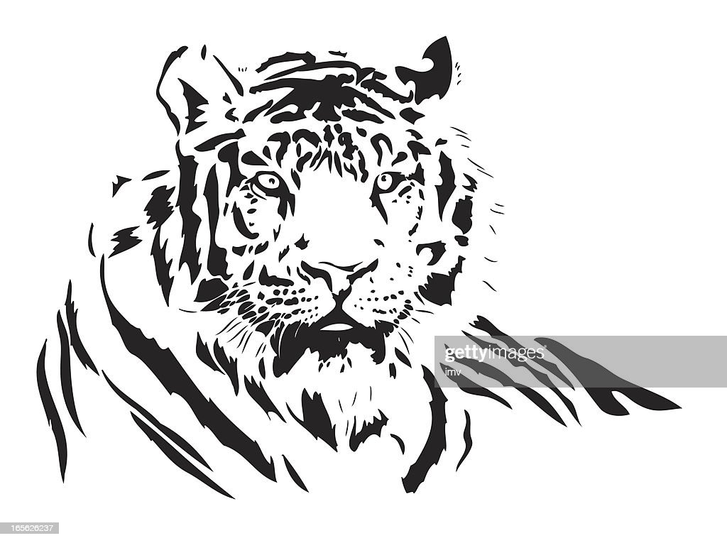 tiger vector vector art getty images