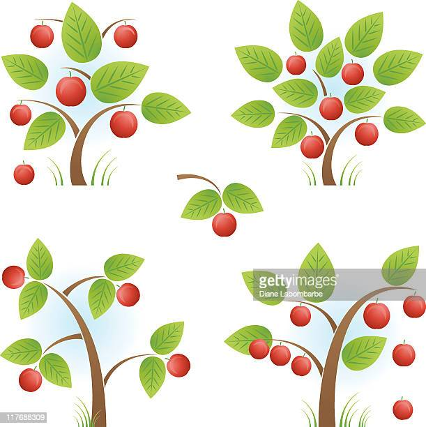 Minuscules arbres Apple