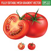Tomato on white background. Vector illustration