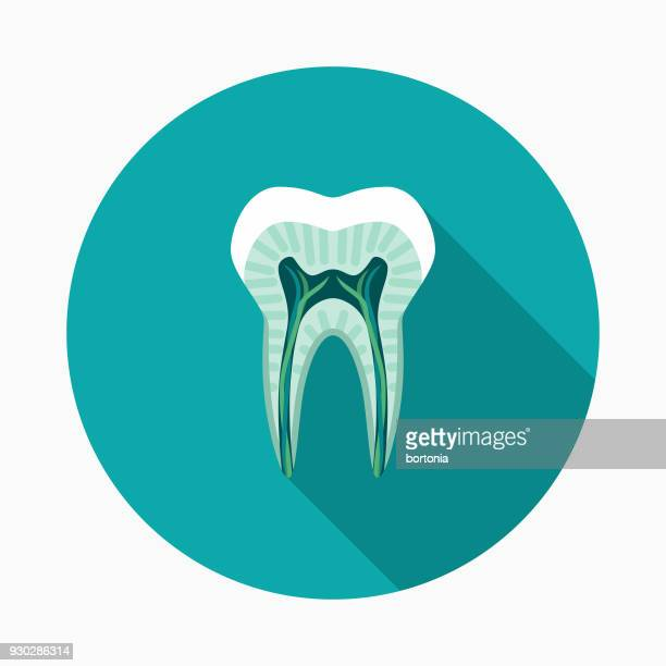 tooth cutaway flat design dentist icon with side shadow - dentin stock illustrations