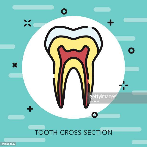 tooth open outline dentist icon - dentin stock illustrations