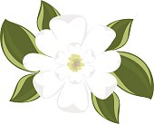 Top view of southern magnolia