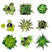 Top view. plants Easy copy paste in your landscape design