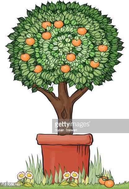 ilustrações de stock, clip art, desenhos animados e ícones de tópia laranjeira - laranjeira