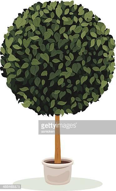 illustrations, cliparts, dessins animés et icônes de art topiaire sphère de - plante verte