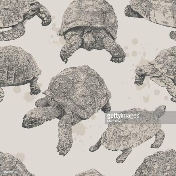 Tortoise Repeat Pattern