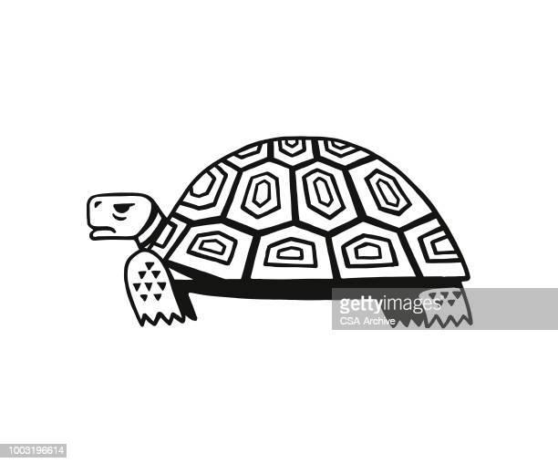 ilustraciones, imágenes clip art, dibujos animados e iconos de stock de tortuga - tortugas