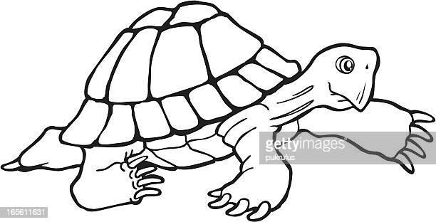 Tartaruga andar