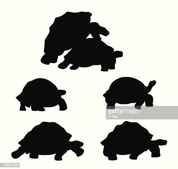 ilustraciones, imágenes clip art, dibujos animados e iconos de stock de tortoises - tortugas