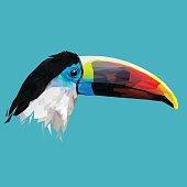 Toucan bird low poly.