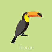 Toucan bird series