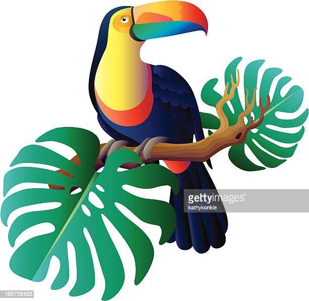 toucan - toucan stock illustrations